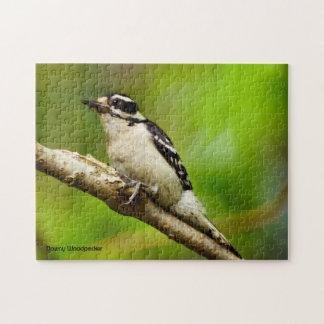 Downy Woodpecker Puzzle