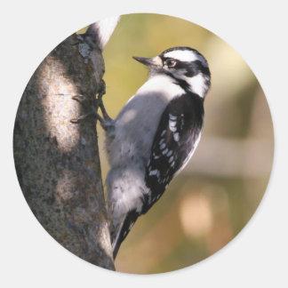 downy-woodpecker round sticker
