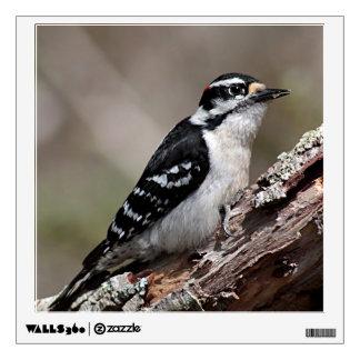 Downy Woodpecker Wall Decal