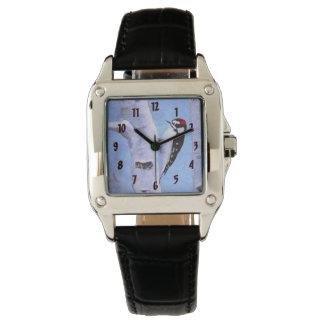 Downy Woodpecker Watch