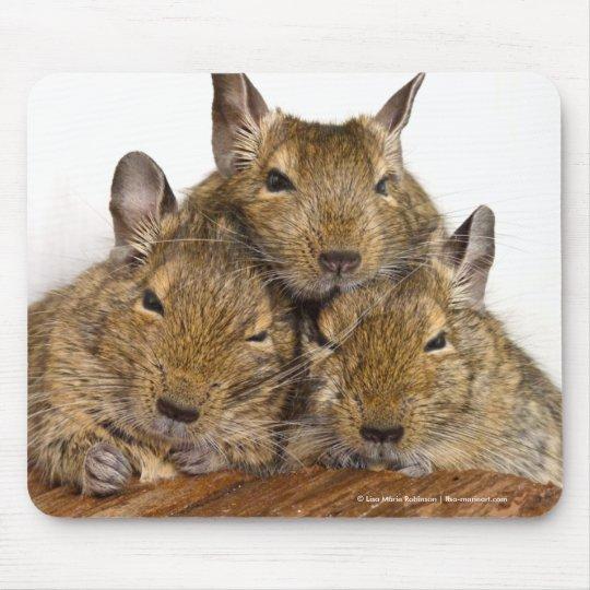 Dozing Degu Trio Mouse Pad