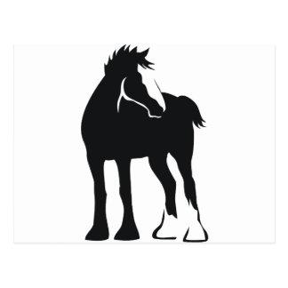 Draft Foal Postcard
