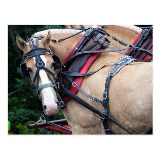 Draft Horse 387 TY Postcard