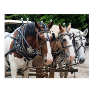 Draft Horse 829 Postcard