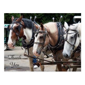 Draft Horse 830 TY Postcard
