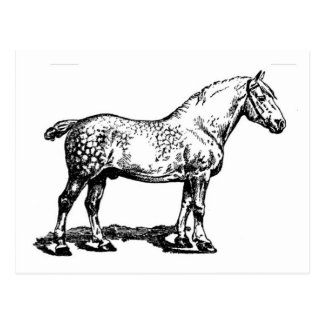 Draft Horse -- Dappled Postcard