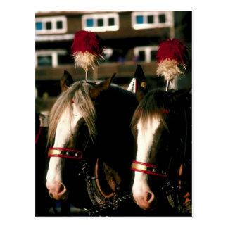 Draft Horse Tandem Postcard