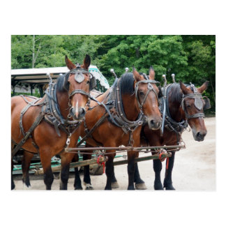 Draft Horses 847 Postcard