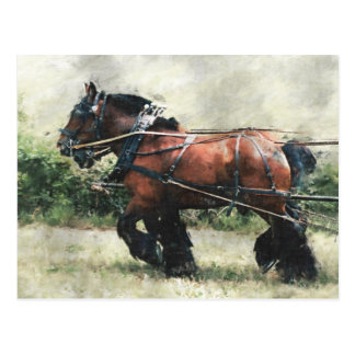 Draft horses in harness postcard