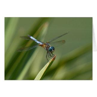 Dragon Fly - Blue Green 06 Card