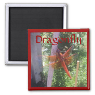DRAGON FLY MAGNETS
