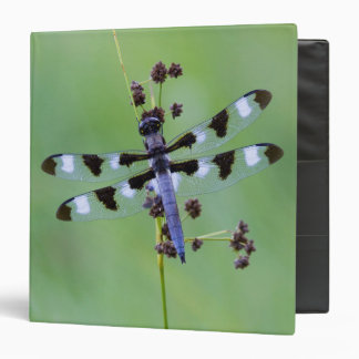 Dragon fly perched on grass, Canada Binders