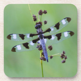 Dragon fly perched on grass, Canada Coaster