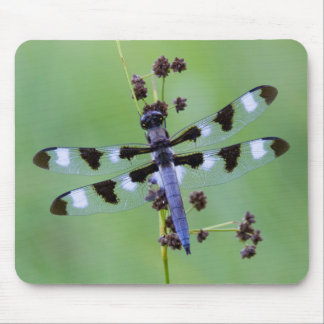 Dragon fly perched on grass, Canada Mouse Pad