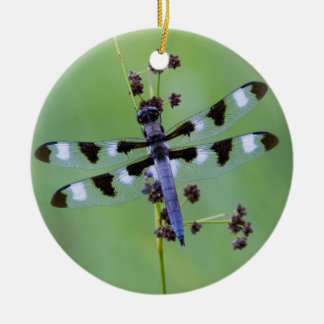 Dragon fly perched on grass, Canada Round Ceramic Ornament