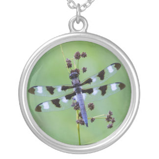 Dragon fly perched on grass, Canada Silver Plated Necklace