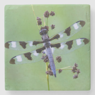 Dragon fly perched on grass, Canada Stone Coaster