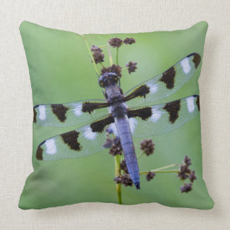 Dragon fly perched on grass, Canada Throw Pillow