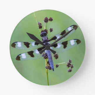 Dragon fly perched on grass, Canada Wallclock