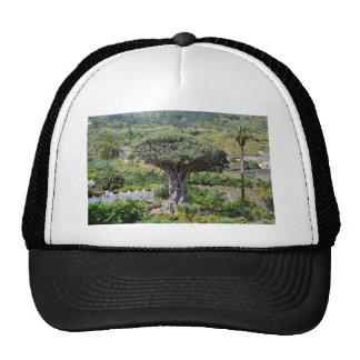 Dragon Tree at Tenerife Trucker Hat