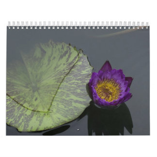 Dragonflies and water lilies wall calendars