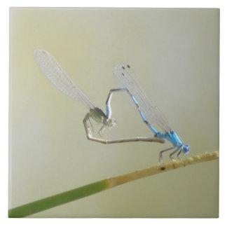 Dragonflies/damselflies in love tile