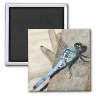 Dragonflies Magnets