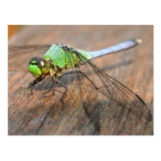 Dragonflies Postcards