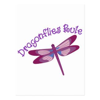 Dragonflies Rule Postcard