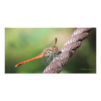 Dragonfly 2 (dragonfly) photo card template