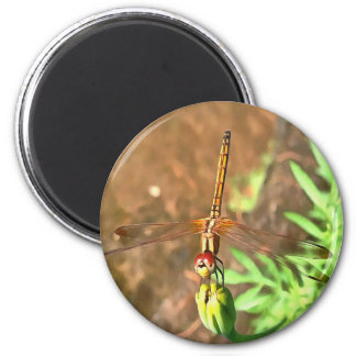 Dragonfly 2 Inch Round Magnet
