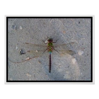 dragonfly at the beach poster