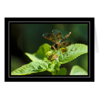 Dragonfly Blank Note Card