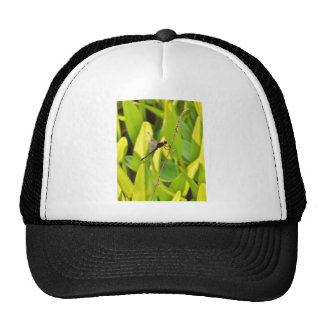 Dragonfly Blue and black on grass. Mesh Hats