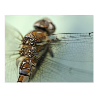 Dragonfly close-up postcard