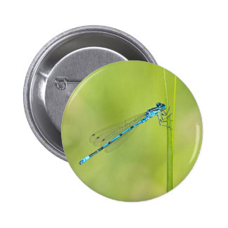 Dragonfly, damselfly button, pin, gift idea