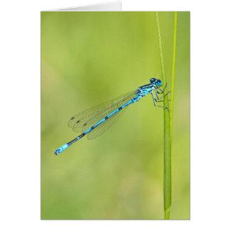 Dragonfly, damselfly greetings card