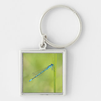 Dragonfly, damselfly keychain, gift idea Silver-Colored square keychain