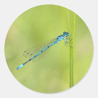 Dragonfly, damselfly stickers, gift idea