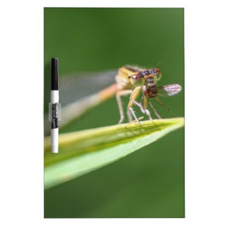Dragonfly Eating Mosquito Dry Erase Board