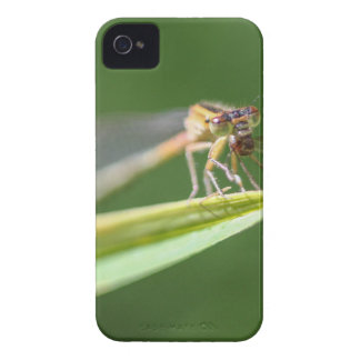 Dragonfly Eating Mosquito iPhone 4 Case-Mate Cases