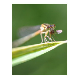 Dragonfly Eating Mosquito Letterhead