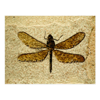 Dragonfly Fossil Postcard