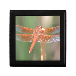 Dragonfly Gift Box