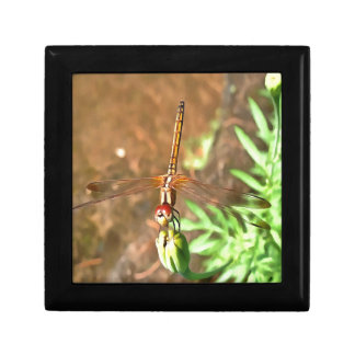 Dragonfly Gift Box