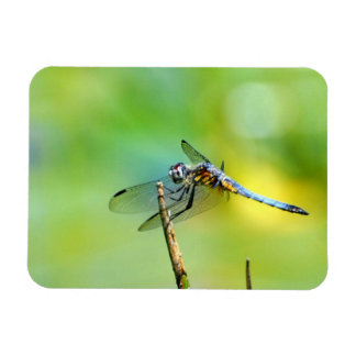 Dragonfly Hang On! Magnet