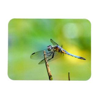 Dragonfly Hang On! Rectangular Photo Magnet