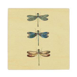Dragonfly Illustrations Maple Wood Coaster