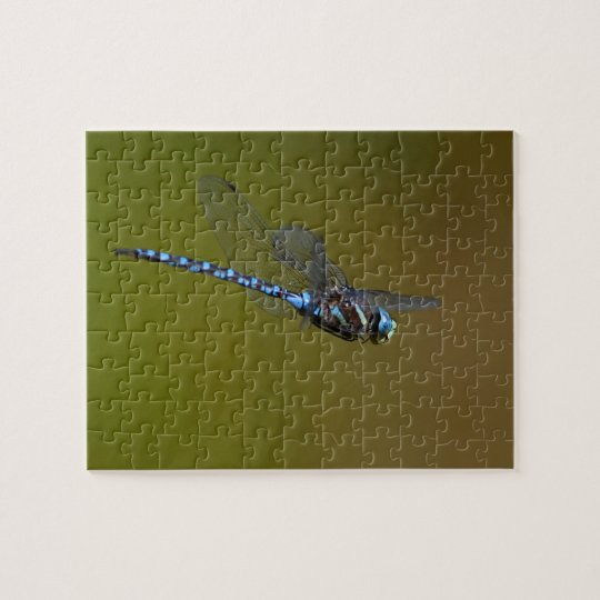 dragonfly in flight jigsaw puzzle