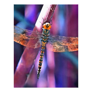 Dragonfly In Orange and Blue Letterhead